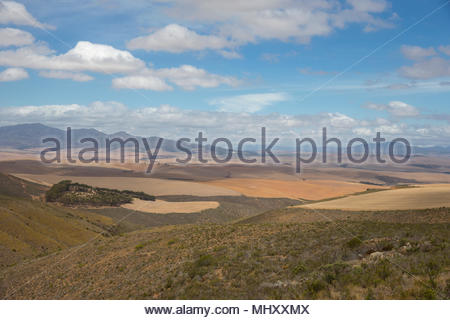 Arid Agricultural Landscape In Western Cape Region Of South Africa - Stock Image