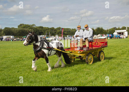 Heavy horse and cart turnout of J.S. McNaughton in the main ring at the Lancashire Game and Country Fair 2015. - Stock Image
