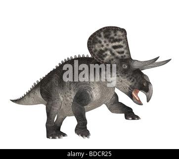 dinosaur Zuniceratops - Stock Image