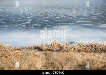 Frozen lake surface abstract, white blue ice and dried brown grass coastal winter seasonal detail in horizontal - Stock Image