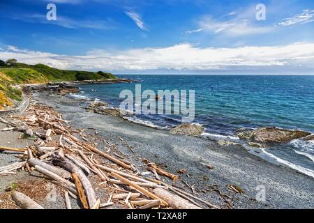 Scattered Driftwood on Pacific Ocean Beach Waterfront on Holland Point Park near Dallas Road in City of Victoria on Vancouver Island BC Canada - Stock Image