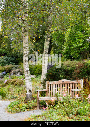 Solid wooden bench offers an autumn set under the silvery barked Betula pendula 'Tristis' in the cottage garden at The Garden House - Stock Image