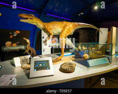 Dorman Museum Middlesbrough display about prehistory of the area with life sized model of an early Cretaceous dinosaur Eotyrannus Legi or Dawn tyrant - Stock Image