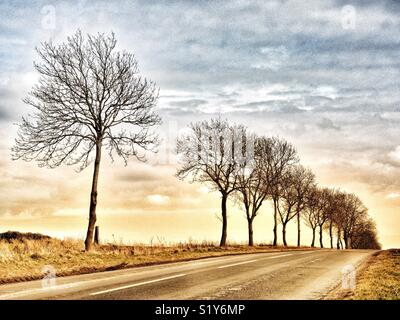 Trees alongside the road in the Yorkshire Wolds, North Yorkshire, England, UK - Stock Image