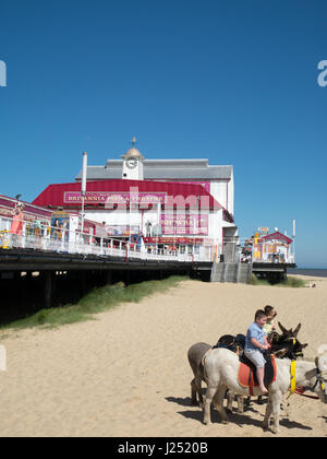 Seaside Donkey Rides beside the Pier on the Golden Sands at the Beach in Great Yarmouth, Norfolk, England, UK - Stock Image