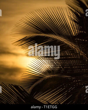 Palm tree and moon. Hawaii, The big island - Stock Image