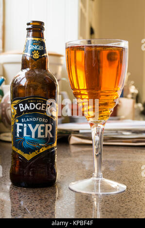 Bottle of real ale called BLANDFORD FLYER (angling term) by Badger Brewery in the UK - Stock Image