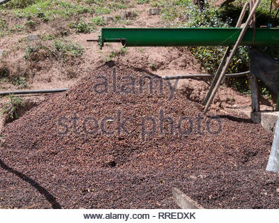 Coffee processing machinery and de-pulped beans waiting to be dried - Stock Image