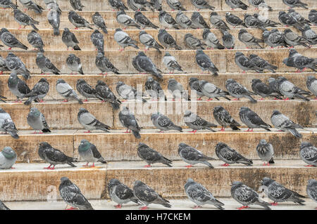 Pigeons on the steps of the New Mosque in Istanbul - Stock Image