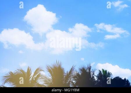 Pastel Sky with Coconut Tree. - Stock Image