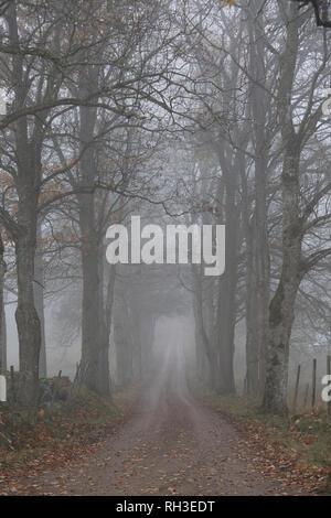 Treelined road in fog - Stock Image