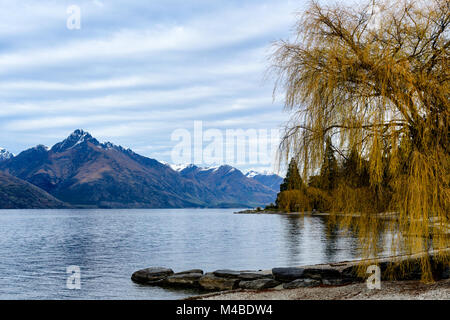 Willow Tree and Mountains - Stock Image