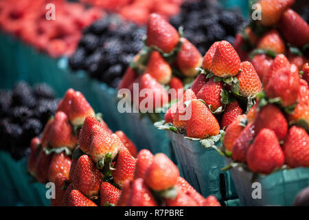 Buckets and Punnets of Strawberries for sale on a Canadian market in Toronto, surrounded by other red abd black berries in the background  picture of  - Stock Image