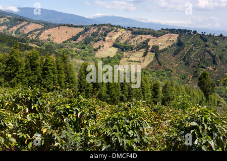 Coffee plantations and rolling farmland in Costa Rica. - Stock Image