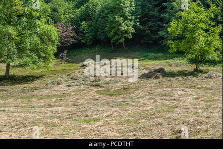 Farmer using a petrol powered blower to gather cut glass in a field. - Stock Image