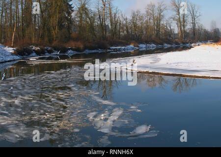 Kanaka Creek Regional Park in the Winter.  Maple Ridge, British Columbia, Canada - Stock Image