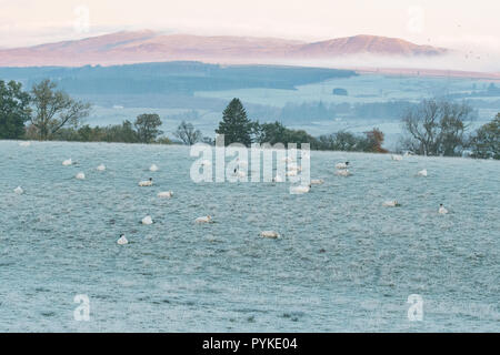 Killearn, Stirlingshire, Scotland, UK. 29th Oct, 2018. uk weather - a misty and frosty start to the day in Stirlingshire Credit: Kay Roxby/Alamy Live News - Stock Image