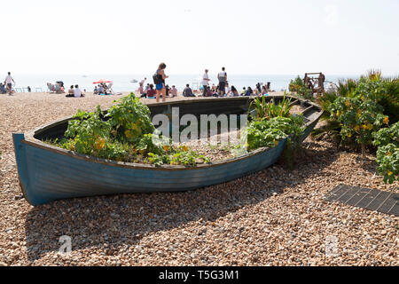 Wooden boat on the beach near Brighton Fishing Museum in East Sussex, England. Greenery is displayed in the boat. - Stock Image