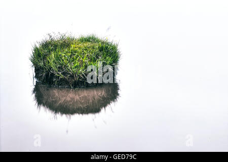 a little grass island in a pond - Stock Image