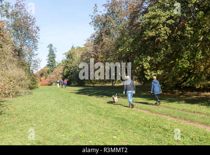 People walking along pathways in National arboretum, Westonbirt arboretum, Gloucestershire, England, UK - Stock Image