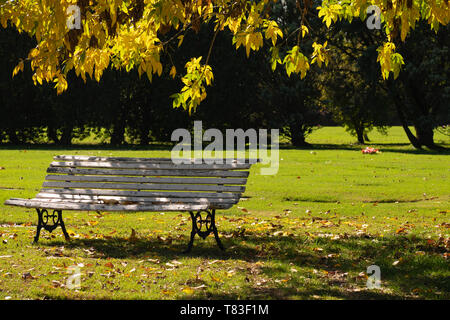 The colors and luminosity of autumn take over this rural image in the suburbs city of Buenos Aires, Argentina. - Stock Image