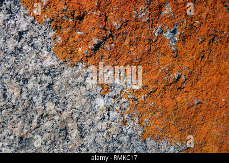 Orange lichen on coastal rocks, Binalong Bay, Bay of Fires, Tasmania, Australia - Stock Image