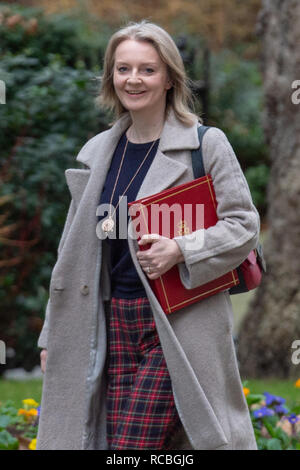 London, United Kingdom. 15 January 2019. Elizabeth Truss, Chief Secretary to the Treasury arrives at 10 Downing Street for the weekly cabinet meeting ahead of the critical Brexit vote. Credit: Peter Manning/Alamy Live News - Stock Image