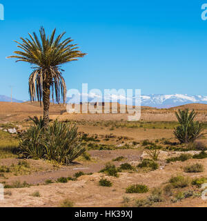 Palm tree in the desert of Ouarzazate with snow on mountains in background - Stock Image