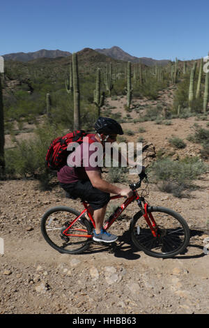 Bike rider and cactus in sonoran desert Tuscon Arizona saguaro cactus - Stock Image