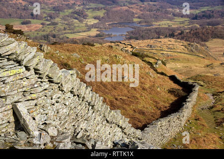 Long meandering drystone wall on Lingmoor Fell with Elterwater beyond, Langdale, Lake District, Cumbria, England, UK - Stock Image
