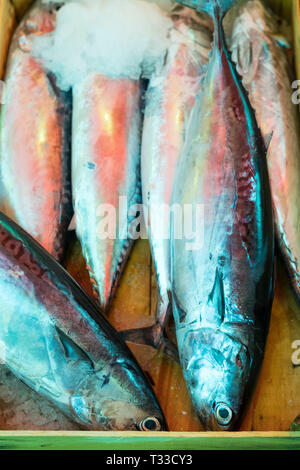 Fresh oily fish chilled with ice on sale at the famous Ballero street market for fresh food in Palermo, Sicily, Italy - Stock Image