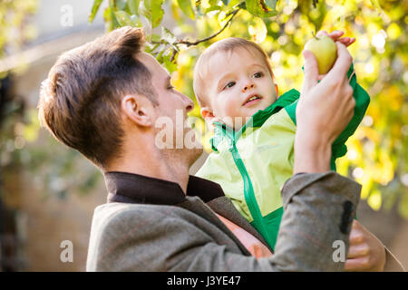 Father and toddler son picking an apple in the garden - Stock Image