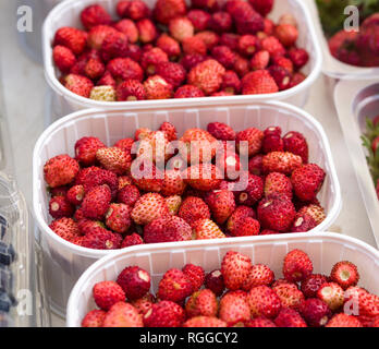 Glowing Red Wild Strawberries: Baskets of fresh wild strawberries on display in a Catalonia market. - Stock Image