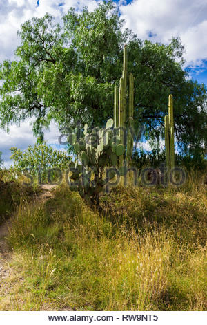 A path goes through cactuses, grass, and trees in rural Mexico. - Stock Image