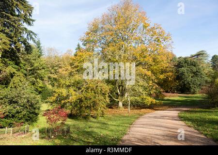 Autumn landscape view National arboretum, Westonbirt arboretum, Gloucestershire, England, UK - Stock Image