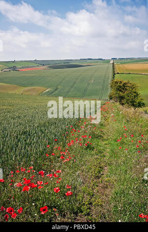 Lang Dale on a summer afternoon at Flixton Wold is an example of the gently rolling limestone landscapes of the Yorkshire Wolds. - Stock Image