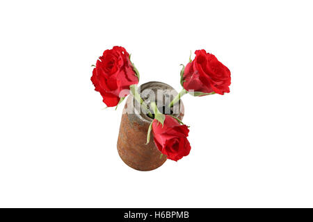 Red flowers in glass - Stock Image