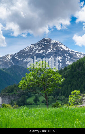 Tree and Monte Chaberton in a rural setting, Soubras, Piemonte, Italy - Stock Image
