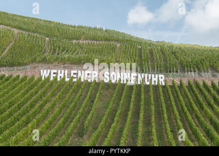 Wehlener Sonnenuhr riesling vineyard in the Moselle valley, Germany, Europe - Stock Image