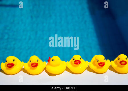 Yellow plastic ducks, bath time toy ducks lined up by a swimming pool - Stock Image