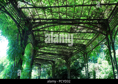 Wisteria pergola in the beautiful Conservatory Garden which is the only formal garden in Central Park, Manhattan on JULY 4th, 2017 in New York, USA. ( - Stock Image