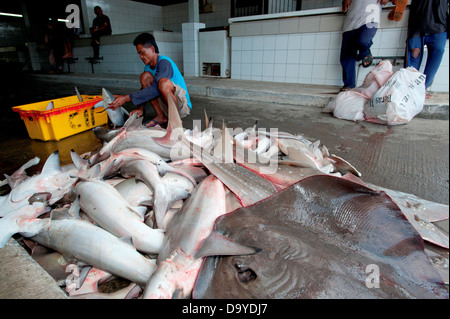 Hammerhead sharks and Rays heaped together to be butchered and finned, Brunei - Stock Image