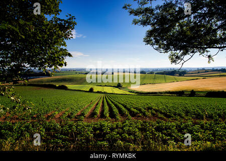Potato and Barley fields near Scrabo in County Down Northern Ireland - Stock Image