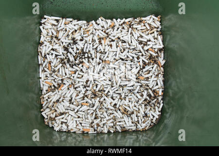 Bin full of cigaret ends, butts, most half smoked, in wheelie bin. Many cigarette butts. - Stock Image