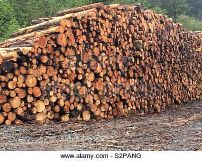 Huge pile of logs - Stock Image