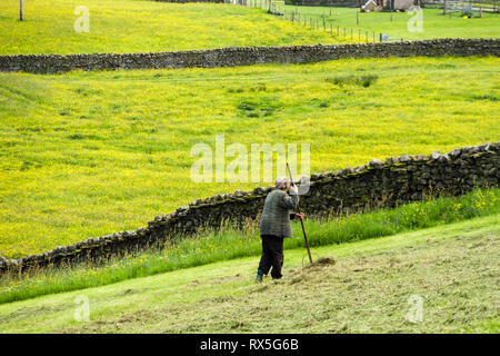 Farmer turning hay by hand rake in a field in summer. Thwaite, Swaledale, Yorkshire Dales National Park, North Yorkshire, England, UK, Britain - Stock Image