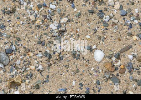 Seashore shingle with solitary seashell. - Stock Image
