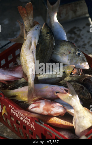 tropical reef fish in shopping basket - Stock Image