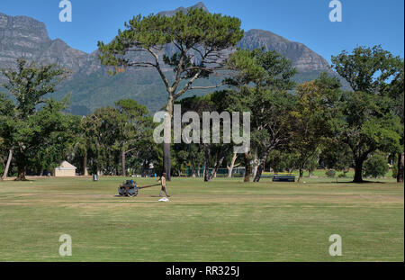 Groundskeeper using a vintage roller to harden to surface of the bowling lane of the local park's cricket ground.  Ground level view with tree lane in - Stock Image