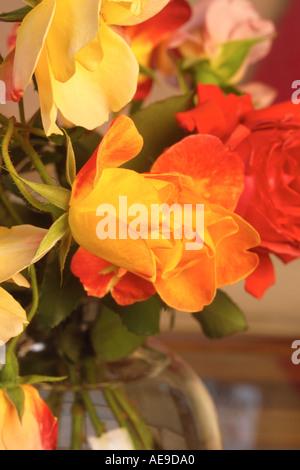 Rose closeup - Stock Image